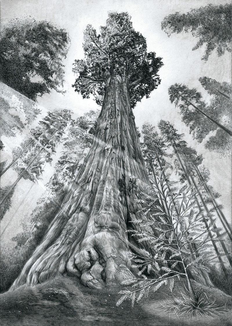 RedwoodsS